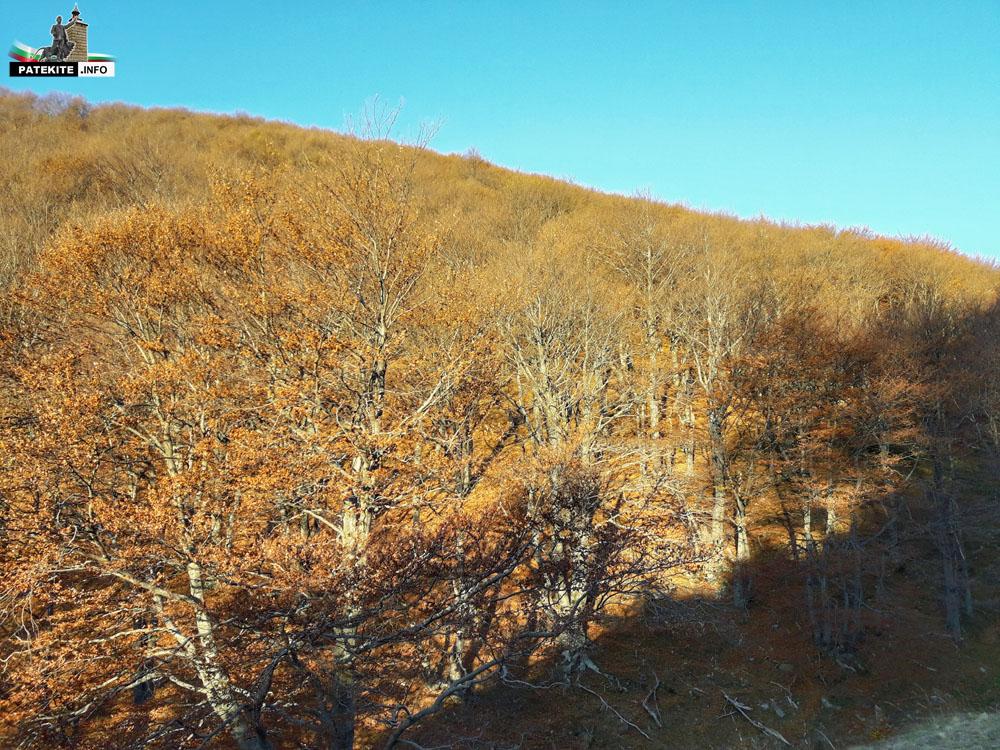 Гора по пътя за връх Вежен