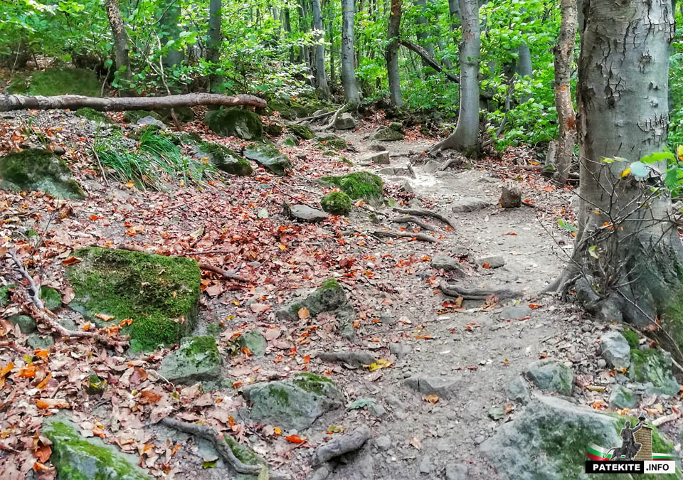 Пътеката до Боянският водопад